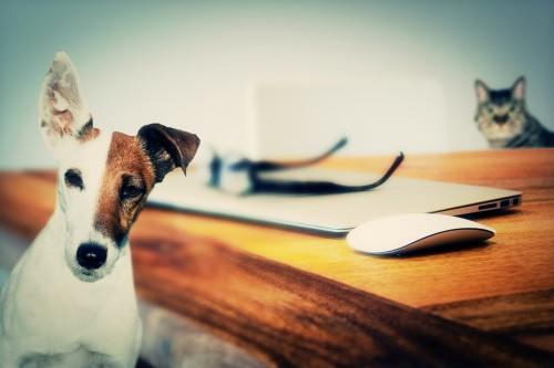 5 règles pour bien choisir les croquettes de son chien ou son chat