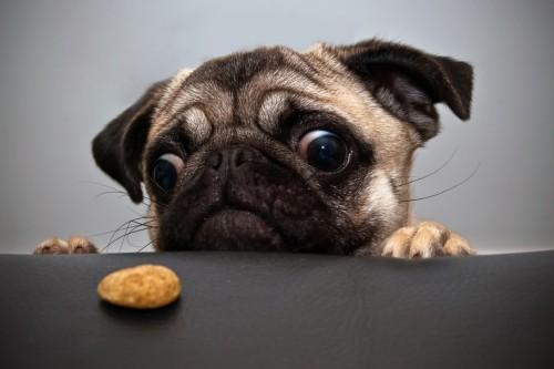 Alimentation du chien : nos conseils