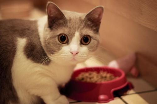 Bien nourrir son chat