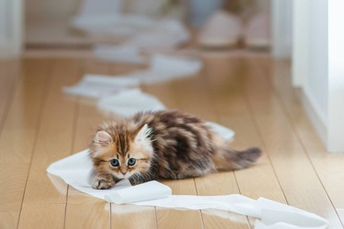 Apprendre à l'obéissance à son chat