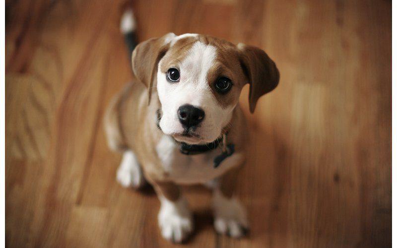 chien en appartement : c'est possible !