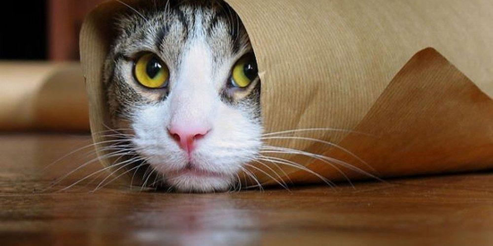 Mon chat ne fait plus dans sa litière