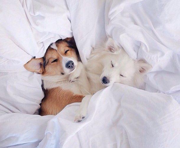 La confiance et l'amour d'un chien se mérite !