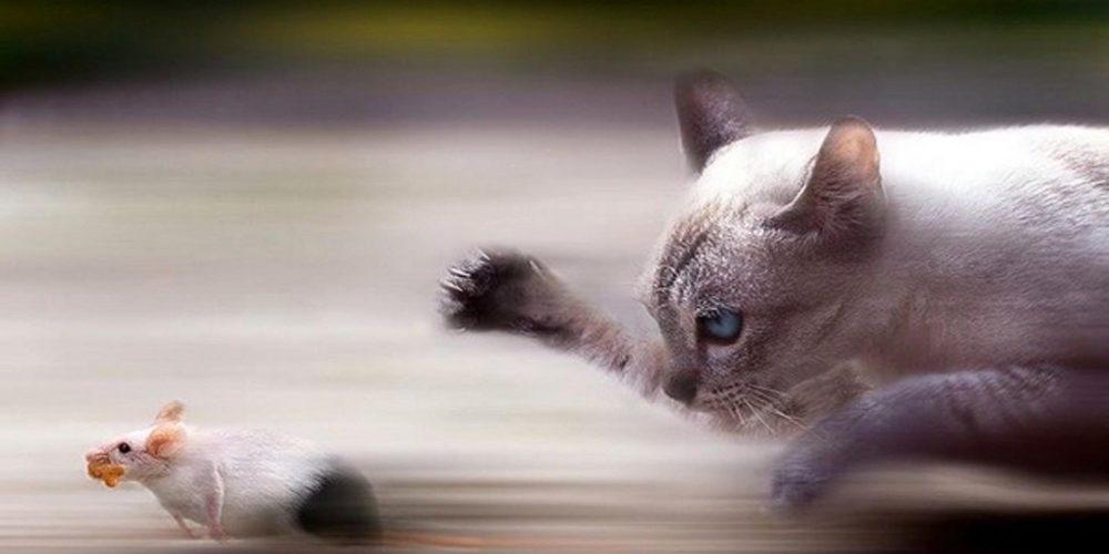 Le chat, ce chasseur