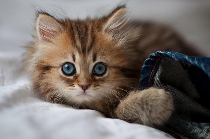 Les clichés les plus entendus sur les chats