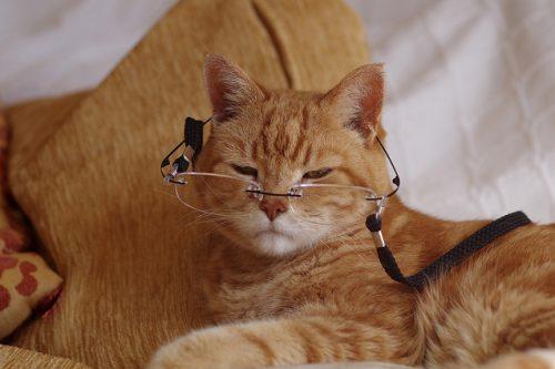 Bien s'occuper d'un chat âgé