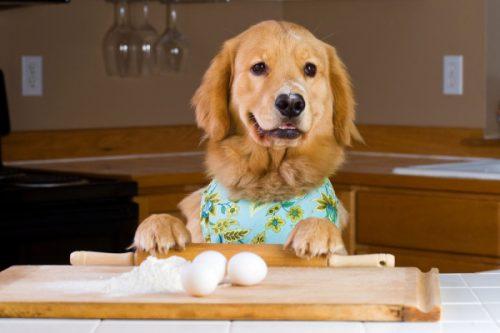 Alimentation du chien : l'éduquer à manger