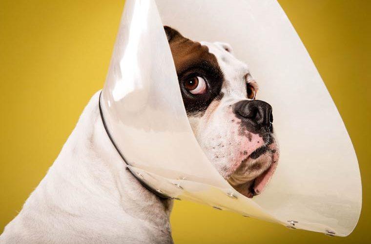 Les gestes de premiers secours qui sauveront votre animal