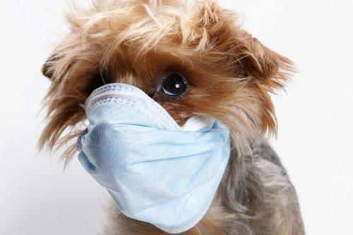 Une assurance médicale pour vos animaux